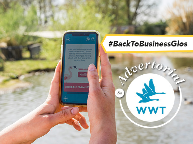 Become a wetland hero with Slimbridge Wetland Centre's free app, launching in June 2021.